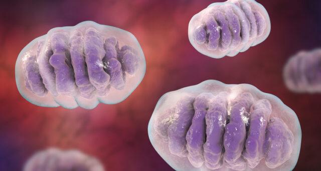 mitokondriell sjukdom